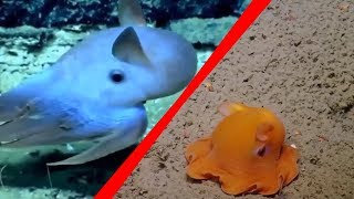 5 Cryptids That Might Actually Exist In Real Life! #2