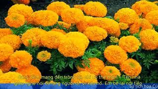 Sự tích hoa Cúc vạn thọ truyện cổ tich tập 31