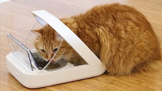 7 Useful Gadgets for Your Pet Lover #1