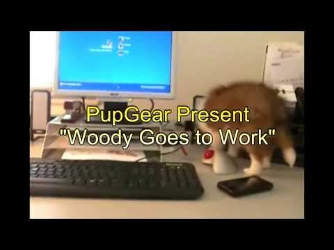 Woody goes to work.wmv