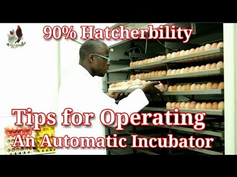 video 300 Eggs Capacity Incubator (Fully Automated | Electric Powered-AC/DC)
