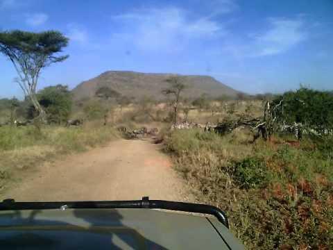 Discover The Unforgettable Adventures Tanzania Safari Tours
