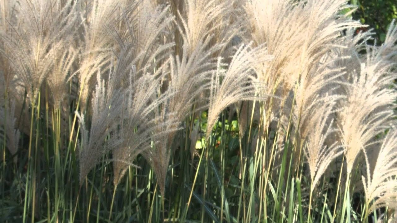 Easy Landscaping Ideas Ornamental Grass Youtube