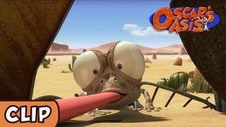 Oscar's Oasis - Lizard and Fly | HQ | Funny Cartoons