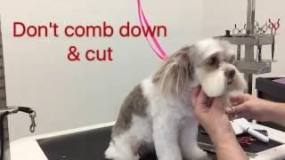 Sue Wright - dog grooming - Maltese cross shihtzu face