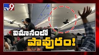 Pigeon enters plane before take-off in Ahmedabad airport..