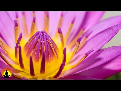 Beautiful Zen Music, Soothing Music, Relaxing, Spa Music, Meditation Music, Chakra, Reiki ✿3283C