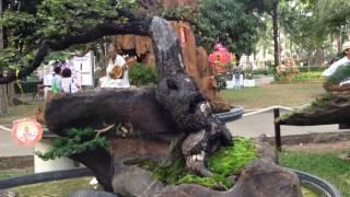 Vietnam Penjing 2017 part 3