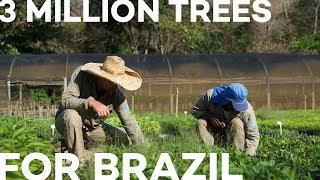 3 Million Trees For Brazil