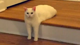 Funny CATS guaranteed to make you laugh - Funny cat compilation