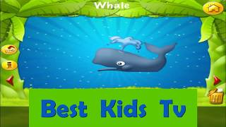 Learn Animals | Animal Sounds | Animals For Kids | Wild Animals 2019