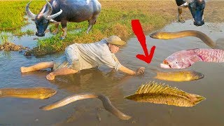 Bắt Lươn Khủng .Bắt Rắn Bị Cắn Suýt Chết .Bắt Cá Chạch Bùn Ngoài Đồng .Catch Eel Fish .Catch Snake