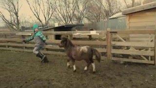 Les chevaux miniatures de l'Art au Poil