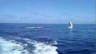 サメの9連続ジャンプ