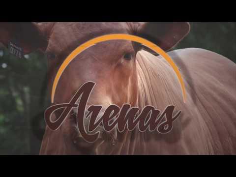 ARENAS: a evolução da Genétic...