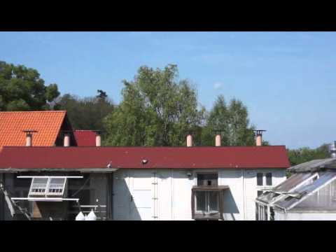 Dominik Palarski - lot nr 2 - Krosno - przylot gołębi - maj 2014r.