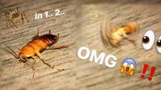 Tiny SPIDER wanted to EAT my SCORPION so I gave it a HUGE cockroach !!!