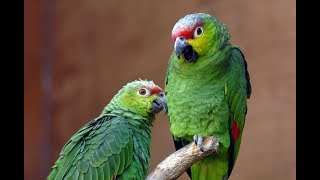 Funny Parrot Dancing - A Funny and Cute Parrots Videos Compilation || NEW HD
