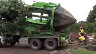 Công nghệ di chuyển cây cổ thụ cực nhanh
