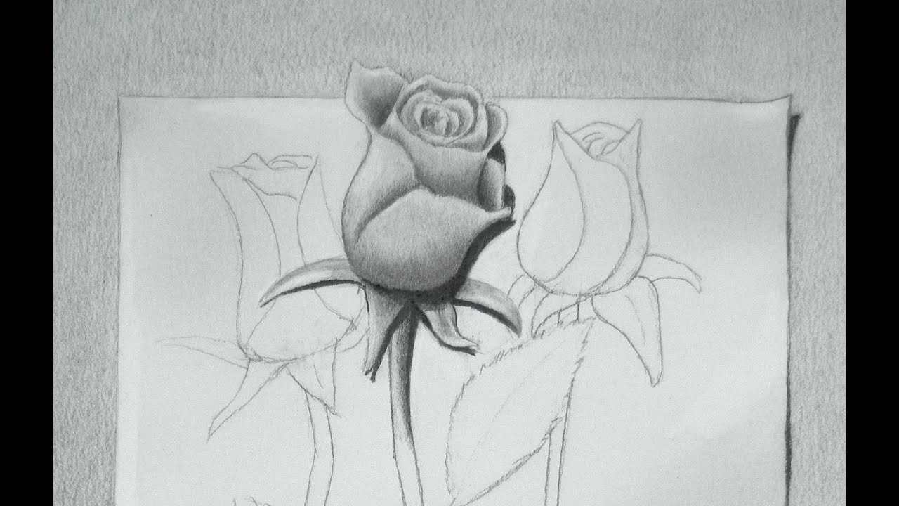 Las Libretas De Dibujo De 10 Artistas Colombianos: How To Draw A Rose