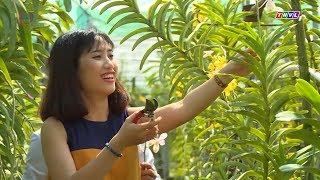 Mô hình trồng phong lan độc đáo của cô gái Tây Ninh | Khởi nghiệp xanh