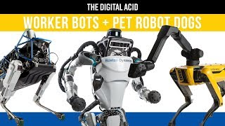 Atlas robot and SpotMini robot dog (TDA EP00)