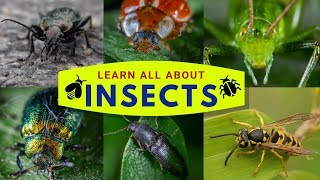 Facts about Insects | Insect Facts for Kids | Unique Facts about 12 Different Bugs