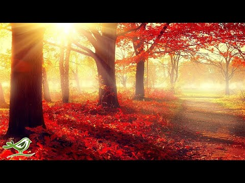 Beautiful Romantic Music: Relaxing Music, Piano Music, Violin Music, Guitar Music, Sleep Music ★101