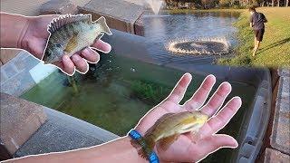 RESTOCKING HOMEMADE LIVE BAIT WELL... *FISH FEED*