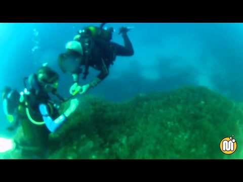 Maltaqua - Diving the Maltese Islands