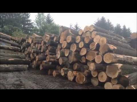 Potter Lumber