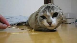 上着の袖の中に収まるネコ