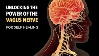 Unlocking the Power of the Vagus Nerve