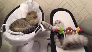 Most funniest and hilarious ANIMAL videos - Funny animal compilation - Laugh by watching