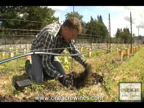 One Acre Napa Valley - Yountville AVA Episode 7  - Planting the vines