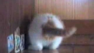かご猫30