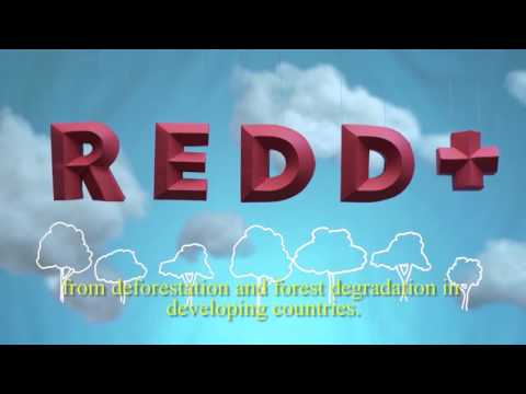 Introducción a REDD+ / Introduction to REDD+ (Spanish with English subtitles)