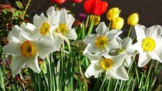 Утре е цветна Цветница - песен