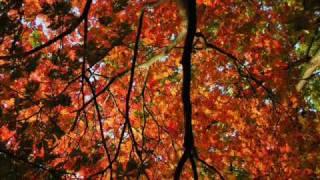 Zupfgeigenhansel – Herbstlied