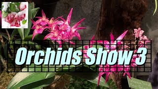 Soos Orchids Show 2019 (3) Slideshow