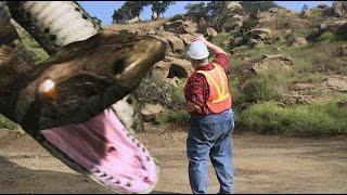Megaconda Real Scary movie