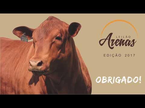 Release Arenas - Edição 2017