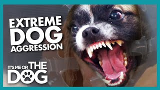 Hyper-Aggressive Dog 'Rusty' Gets Violent at the Vets | It's Me or the Dog