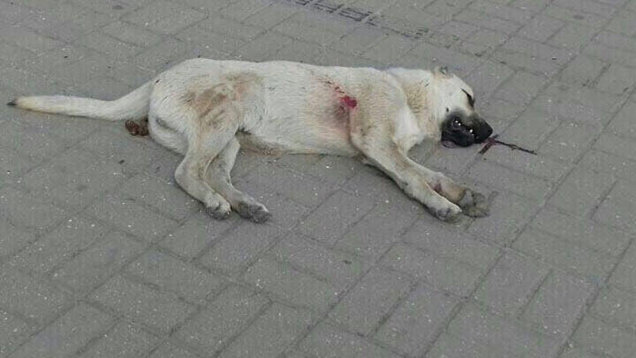 Жители Каспийска сообщают об отстреле бездомных собак