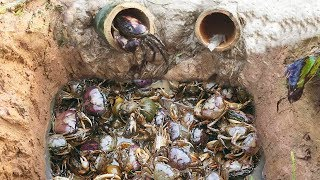 Amazing Smart Boy Deep Bamboo Hole Catch A Lot Of Crabs In Cambodia