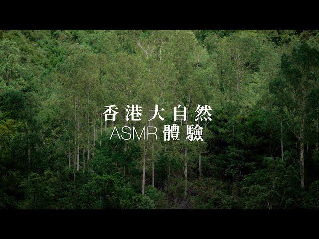 防疫居家解悶療癒新配方 ASMR影片體驗沈浸式雲旅遊
