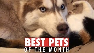 Best Pets of the Month   January 2018