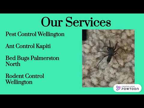 Borer Treatment Palmerston North