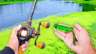 Fishing w/ FROGS for GIANT Bass! (LOADED)