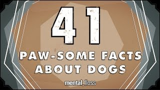 41 Facts About Dogs - mental_floss on YouTube (Ep.213)